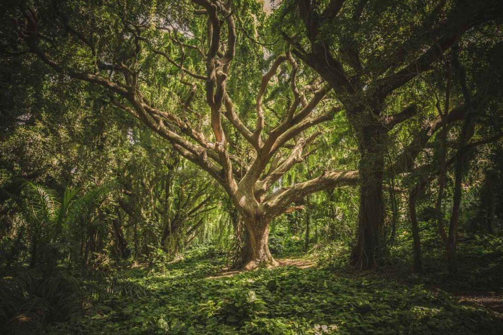 abero della foresta
